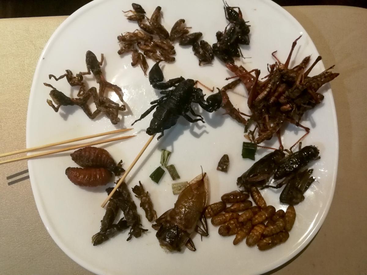 Eat bugs in Banhkok