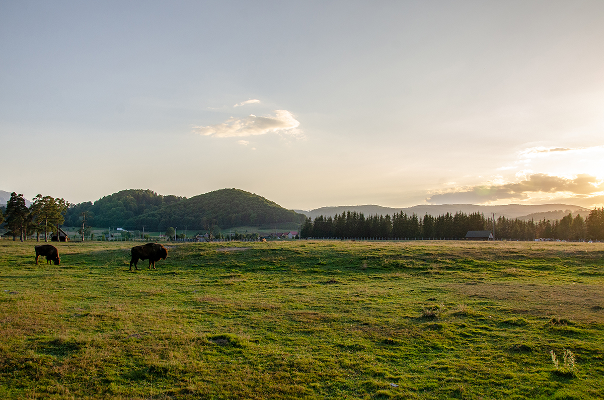Bison Valley