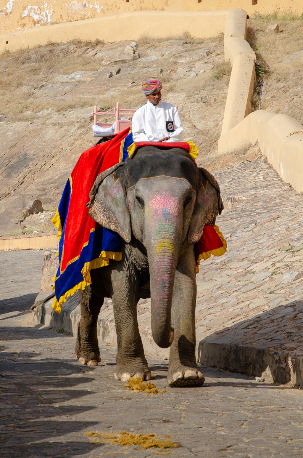 Elephants - Amber Fort